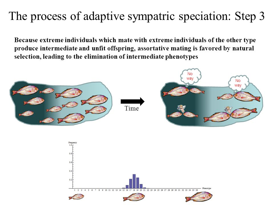 The process of adaptive sympatric speciation: Step 3