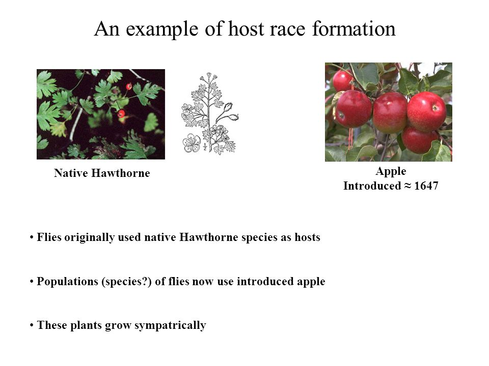 An example of host race formation
