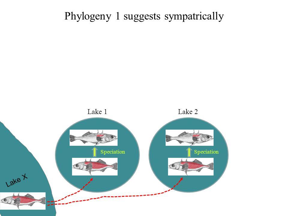 Phylogeny 1 suggests sympatrically