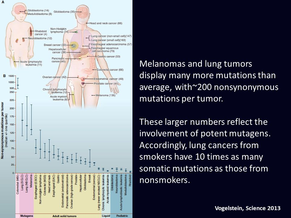 Melanomas and lung tumors display many more mutations than average, with~200 nonsynonymous