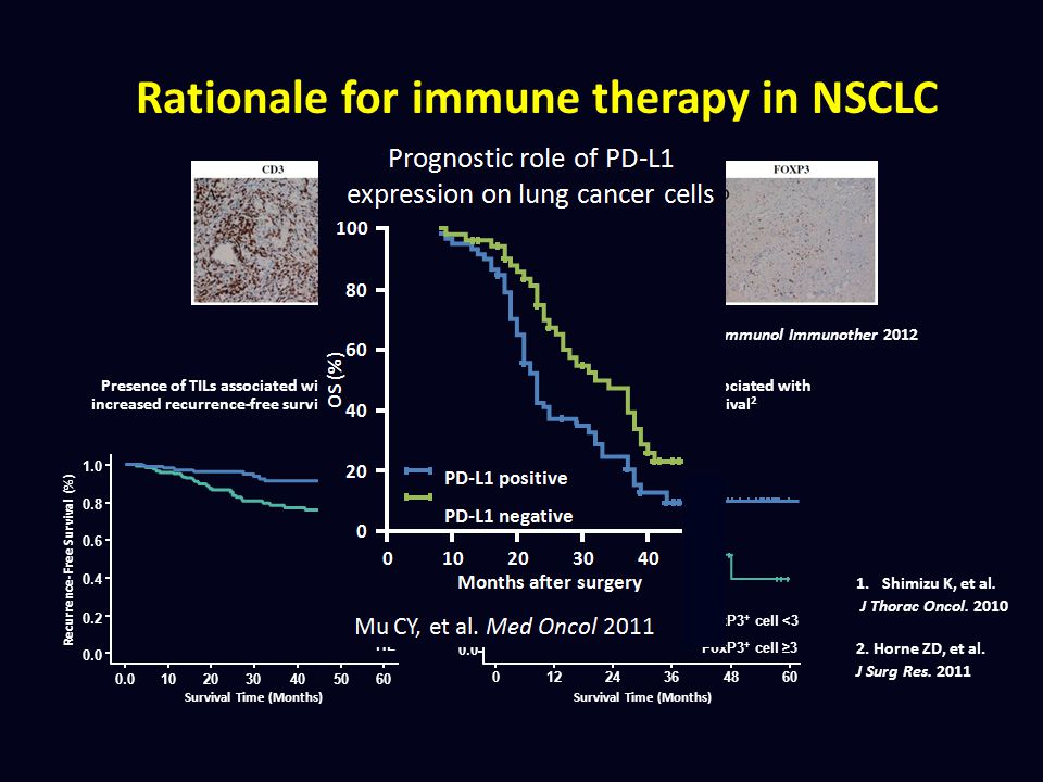 Rationale for immune therapy in NSCLC