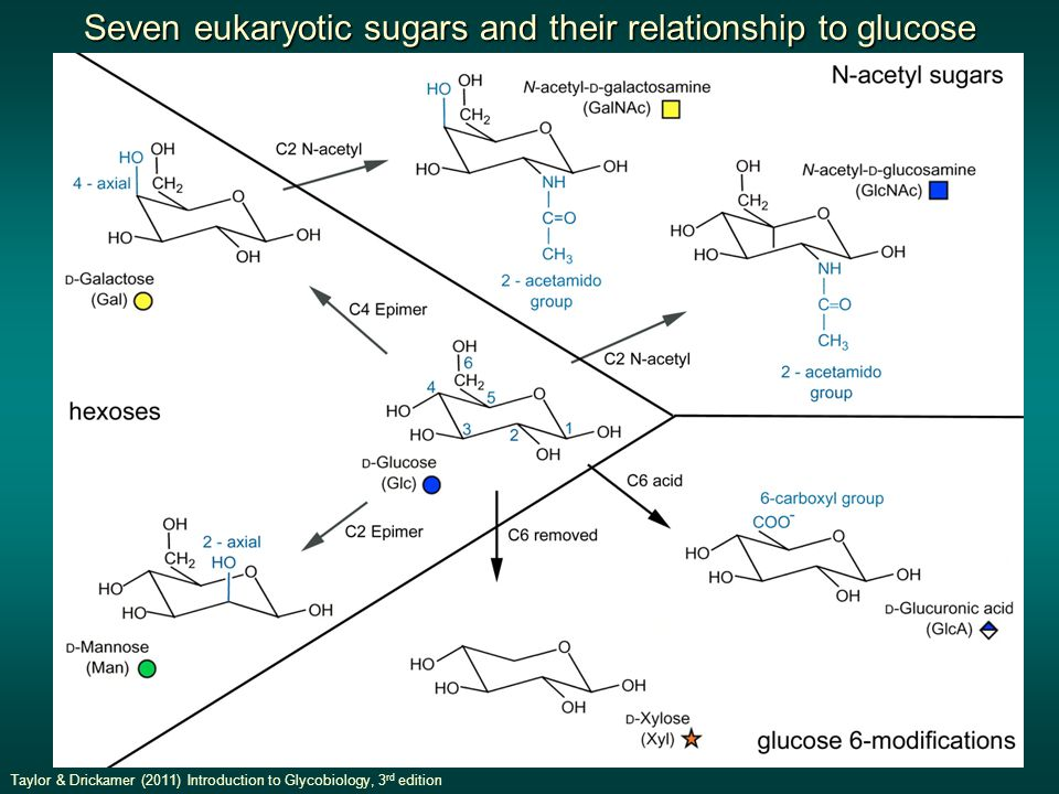 Seven eukaryotic sugars and their relationship to glucose