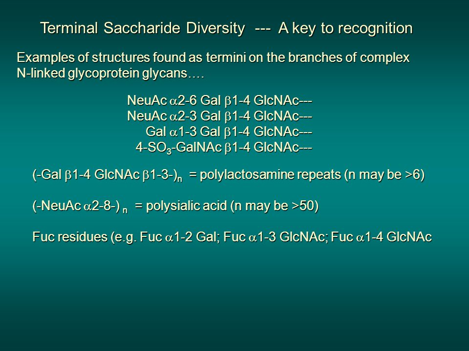 Terminal Saccharide Diversity --- A key to recognition