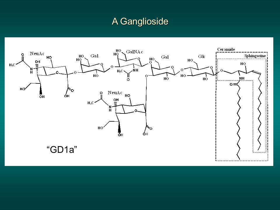 A Ganglioside GD1a