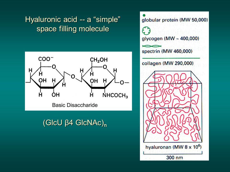 Hyaluronic acid -- a simple space filling molecule
