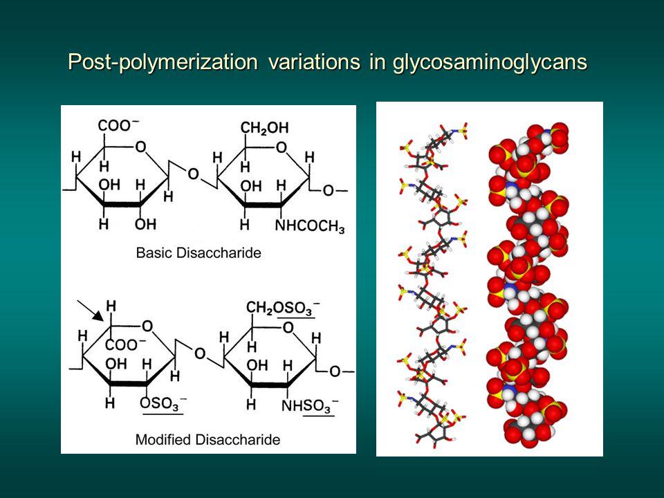 Post-polymerization variations in glycosaminoglycans