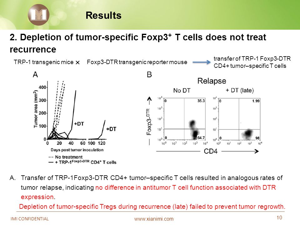 Results 2. Depletion of tumor-specific Foxp3+ T cells does not treat
