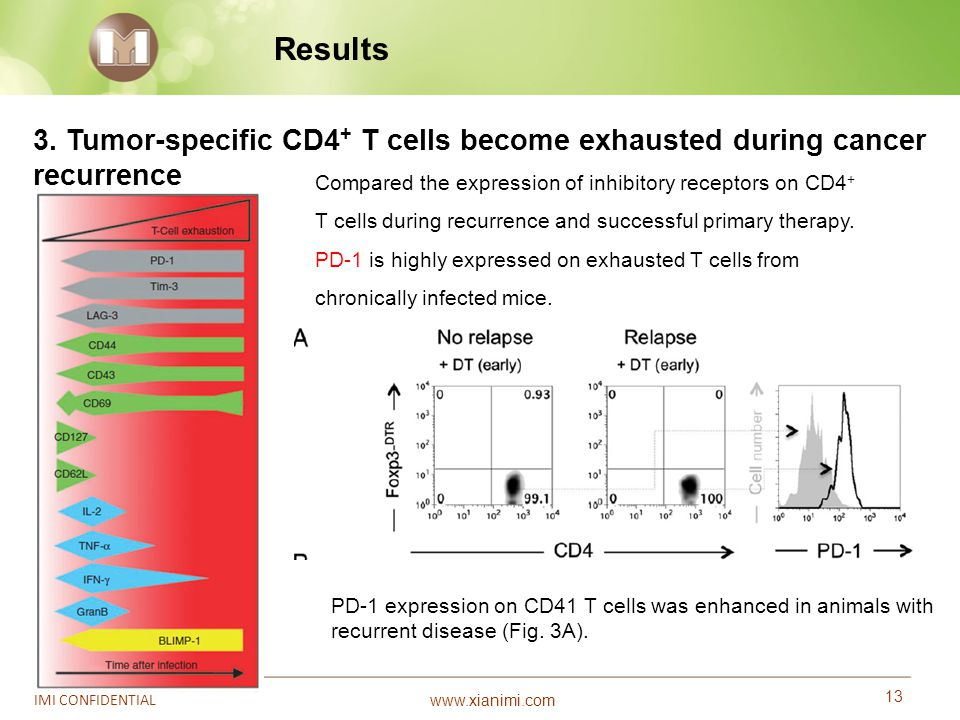 Results 3. Tumor-specific CD4+ T cells become exhausted during cancer recurrence.