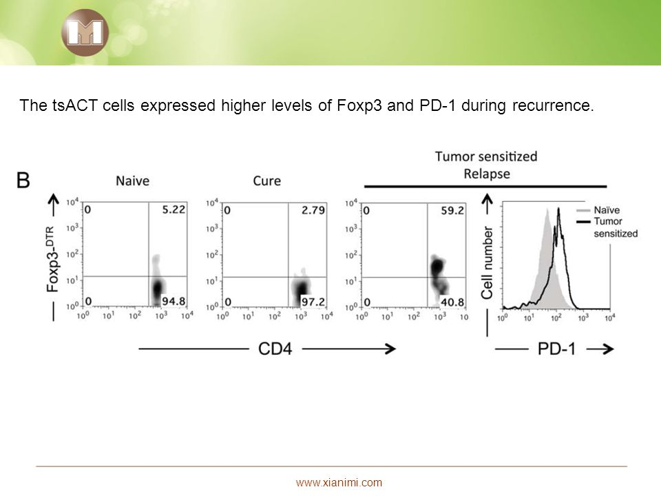 The tsACT cells expressed higher levels of Foxp3 and PD-1 during recurrence.