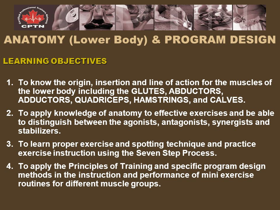 ANATOMY (Lower Body) & PROGRAM DESIGN