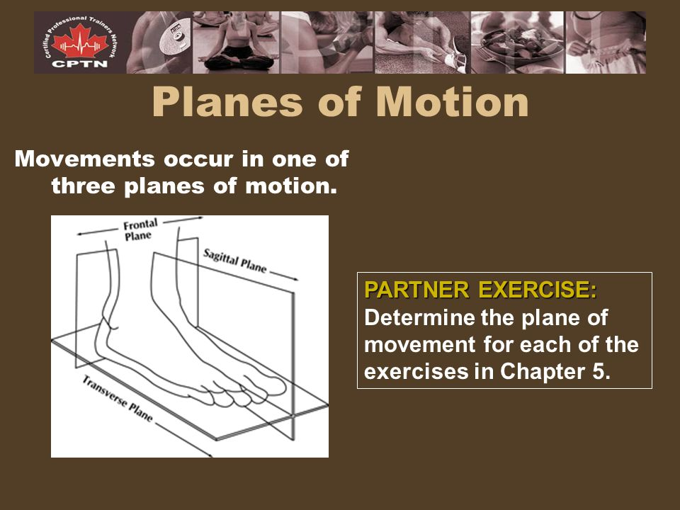 Movements occur in one of three planes of motion.