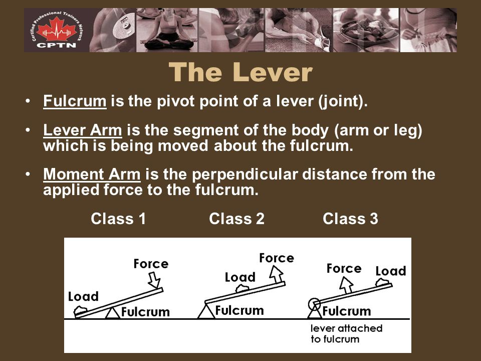 The Lever Fulcrum is the pivot point of a lever (joint).