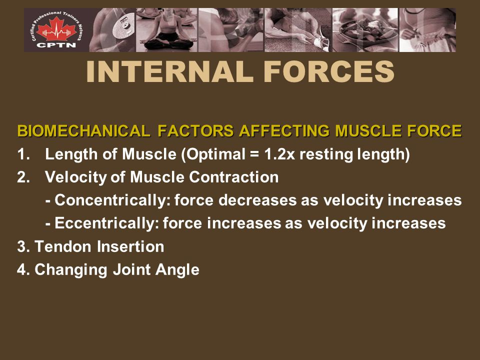 INTERNAL FORCES BIOMECHANICAL FACTORS AFFECTING MUSCLE FORCE