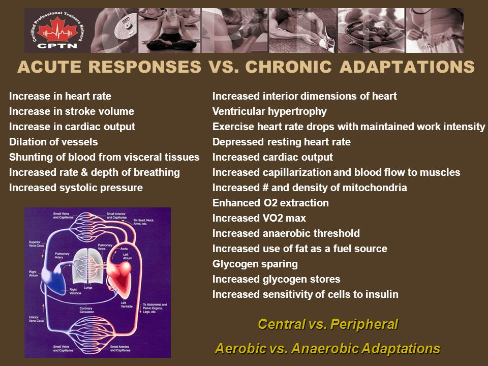 ACUTE RESPONSES VS. CHRONIC ADAPTATIONS