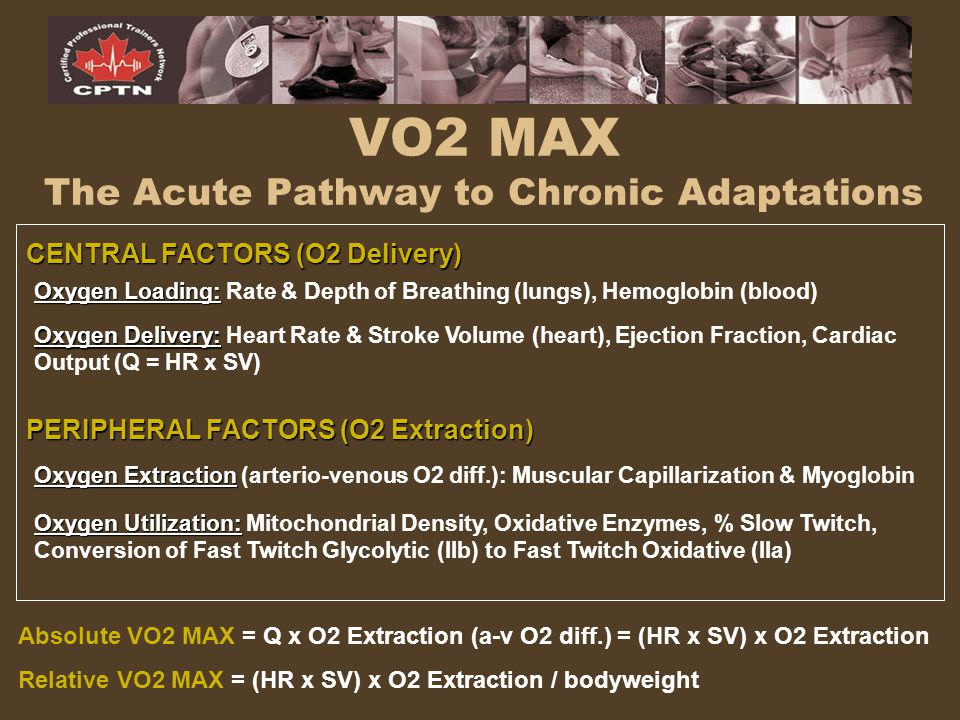 VO2 MAX The Acute Pathway to Chronic Adaptations