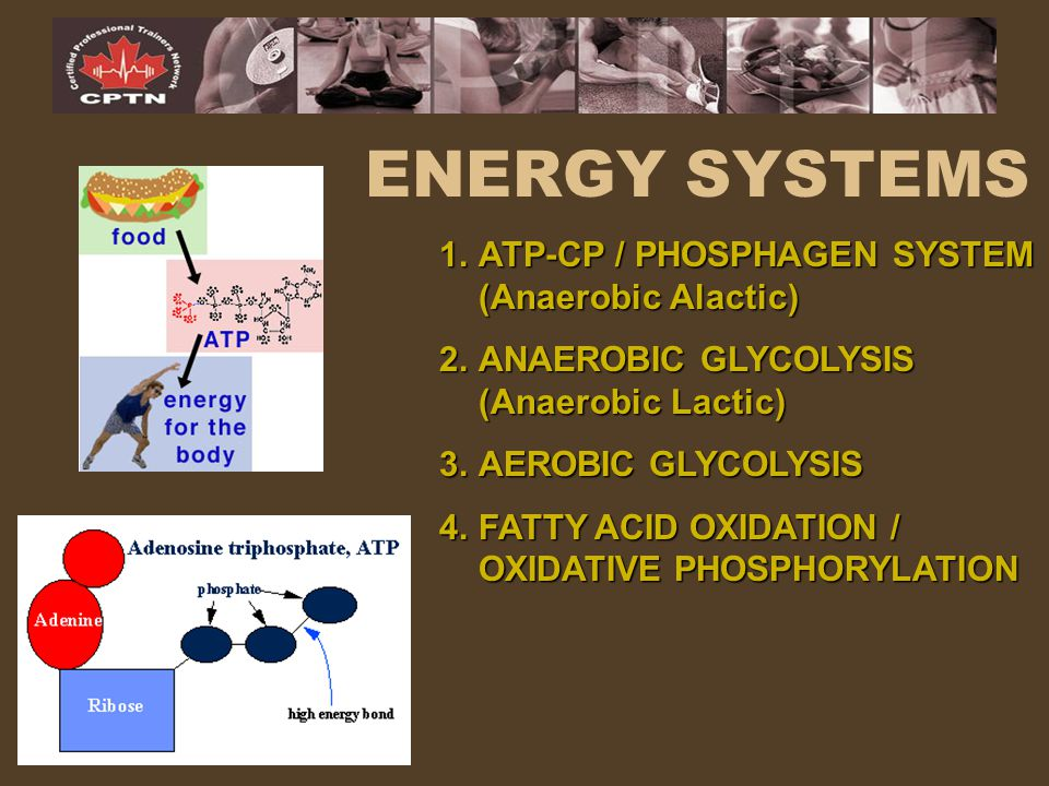 ENERGY SYSTEMS ATP-CP / PHOSPHAGEN SYSTEM (Anaerobic Alactic)