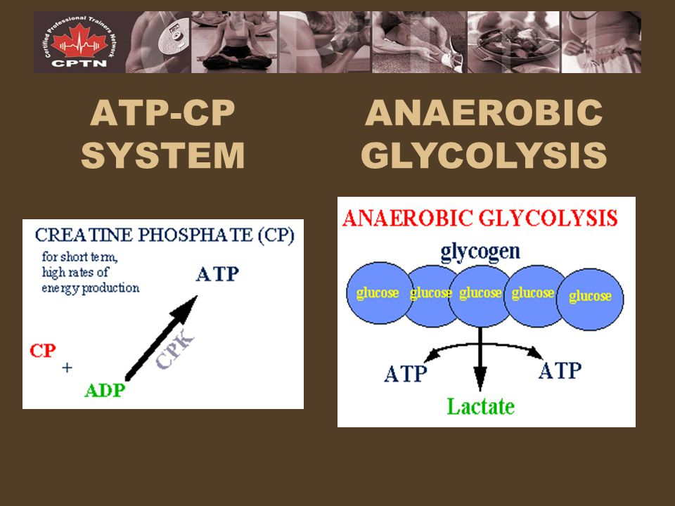 atp cp pathway Part 1: training your energy systems: the sprint system (atp-pcr, phosphate) part 3: training your energy systems: the oxidative (aerobic) system this article is an excerpt from the australian rugby (aru) player development curriculum, authored by our pro coaches david boyle and john mitchell .
