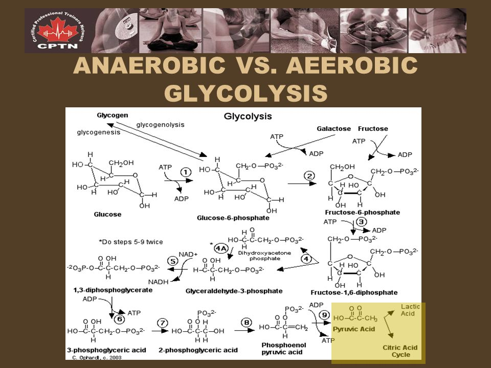 ANAEROBIC VS. AEEROBIC GLYCOLYSIS