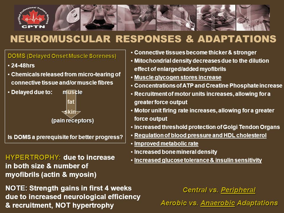 NEUROMUSCULAR RESPONSES & ADAPTATIONS