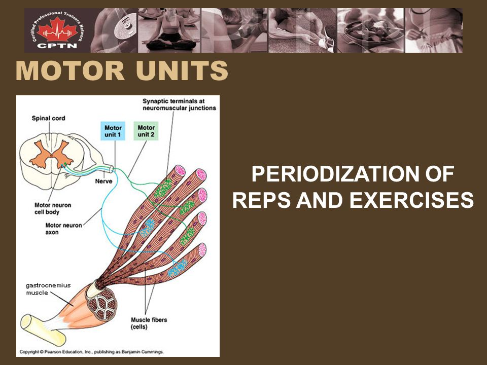 PERIODIZATION OF REPS AND EXERCISES