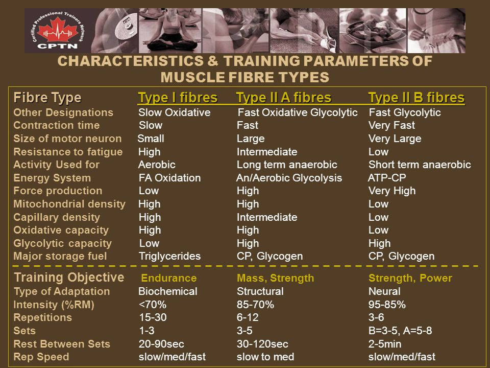 CHARACTERISTICS & TRAINING PARAMETERS OF MUSCLE FIBRE TYPES