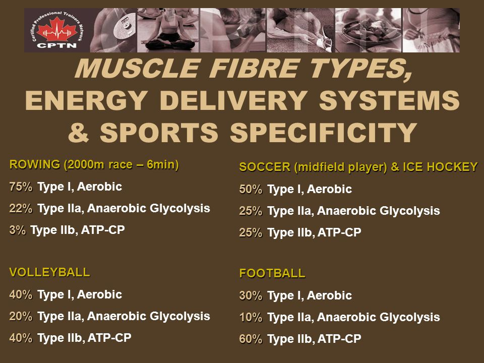 MUSCLE FIBRE TYPES, ENERGY DELIVERY SYSTEMS & SPORTS SPECIFICITY