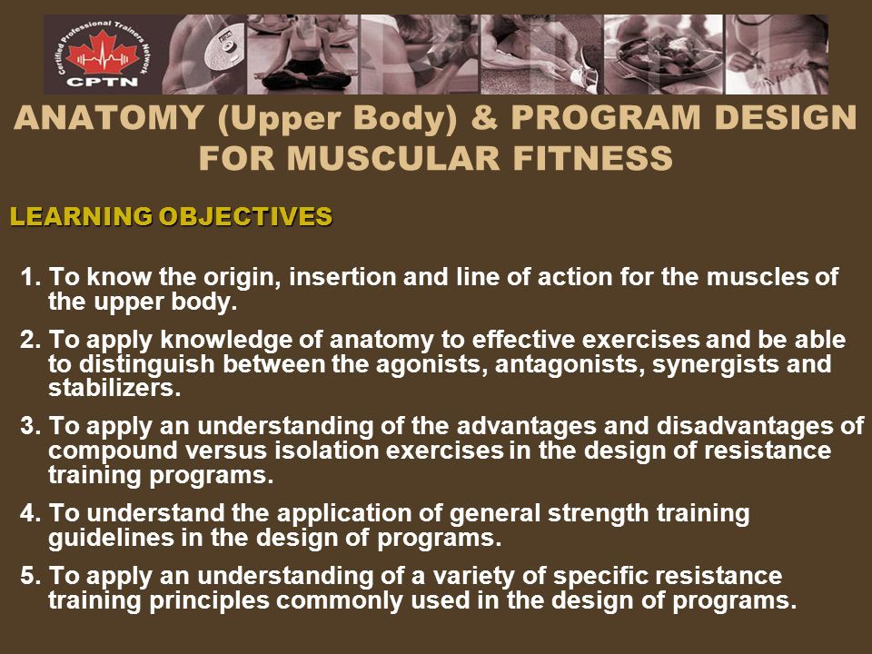 ANATOMY (Upper Body) & PROGRAM DESIGN FOR MUSCULAR FITNESS