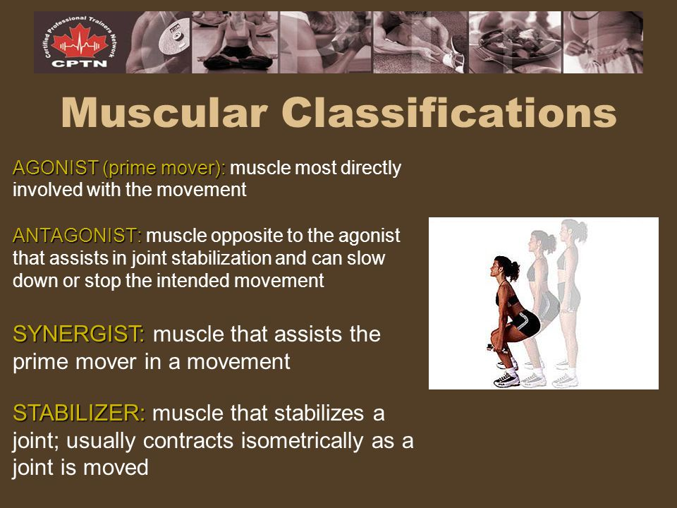 Muscular Classifications