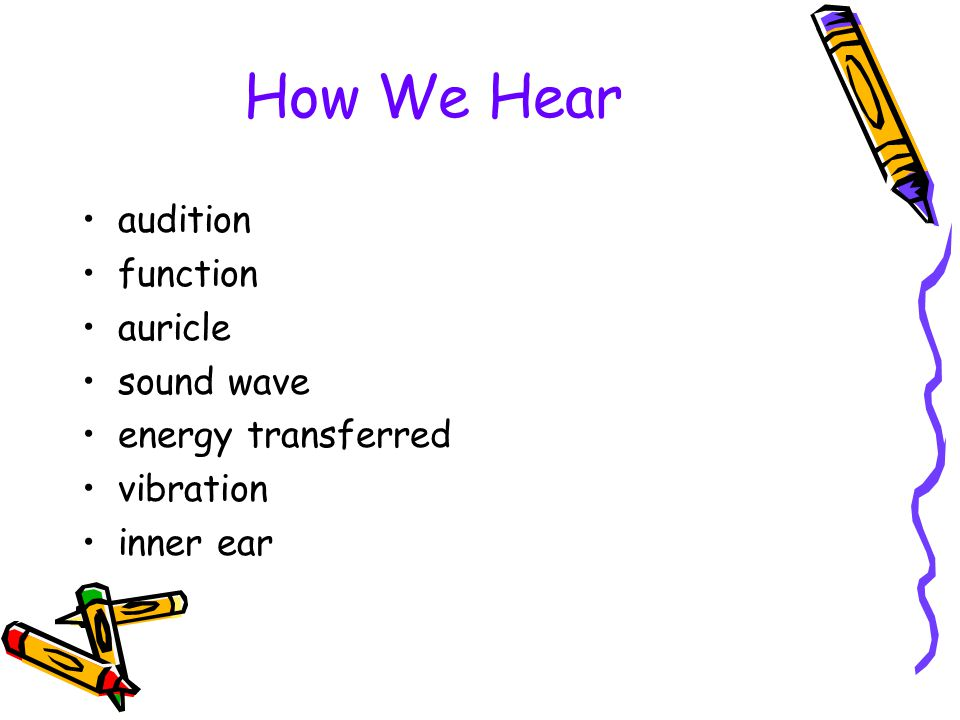 How We Hear audition function auricle sound wave energy transferred