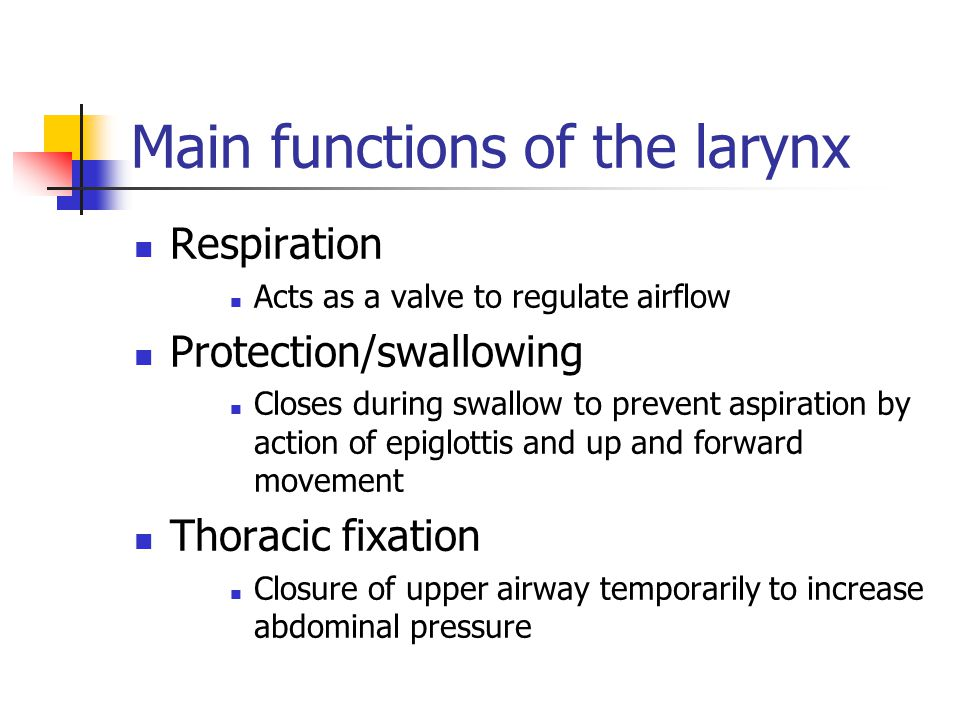 Main functions of the larynx