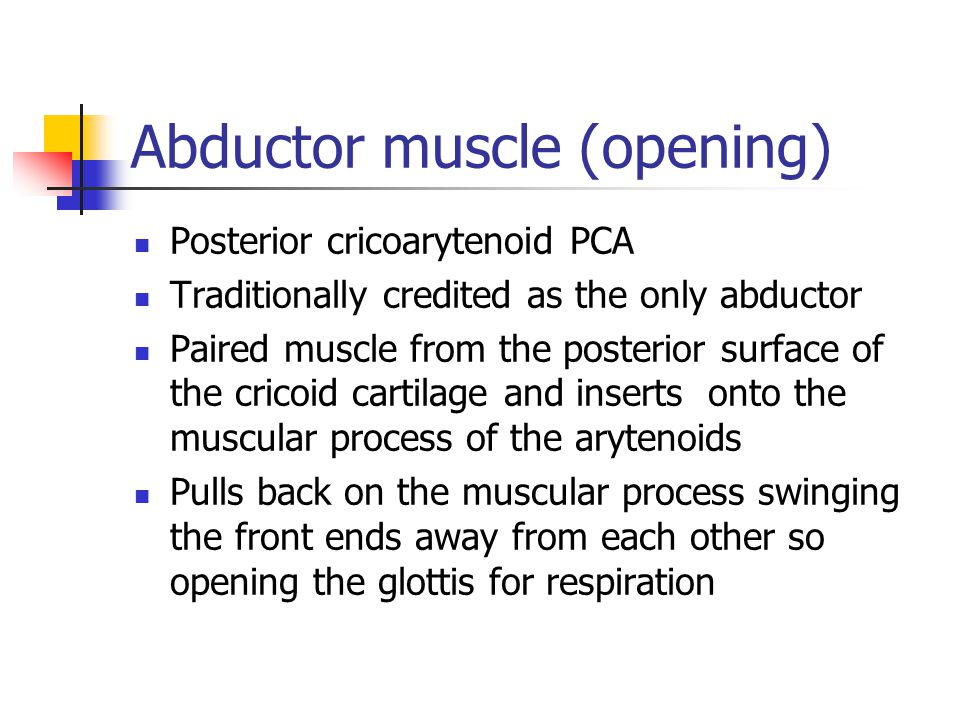 Abductor muscle (opening)
