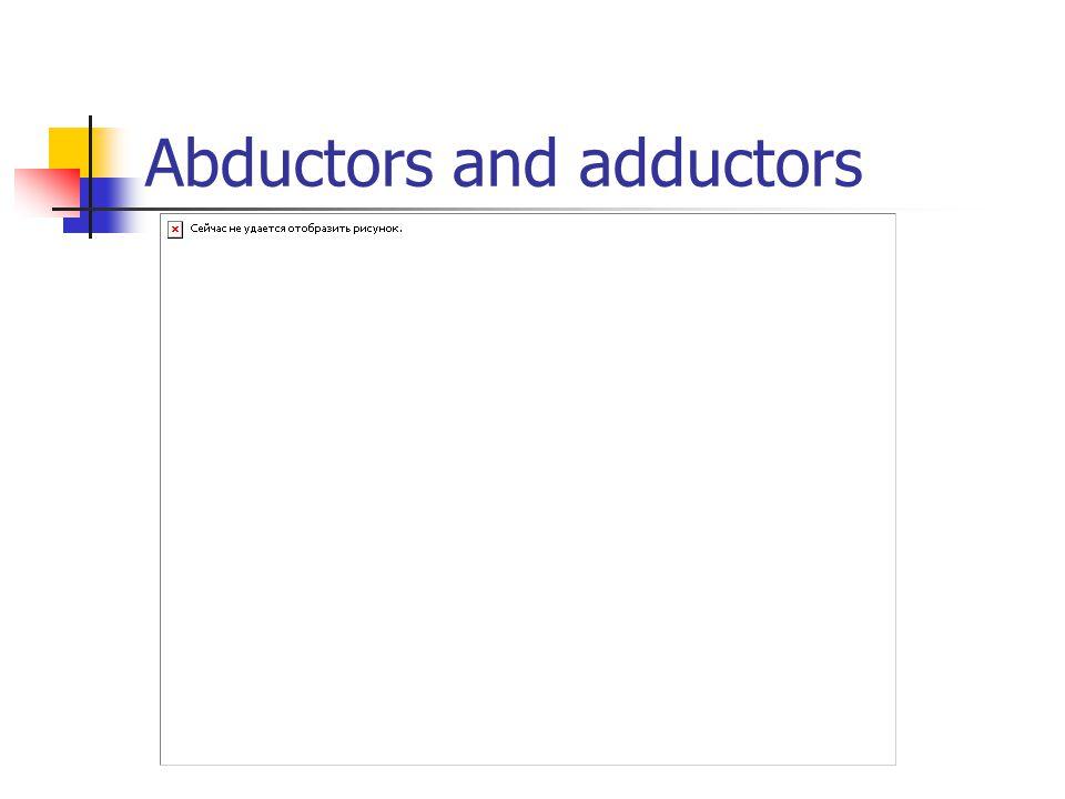 Abductors and adductors