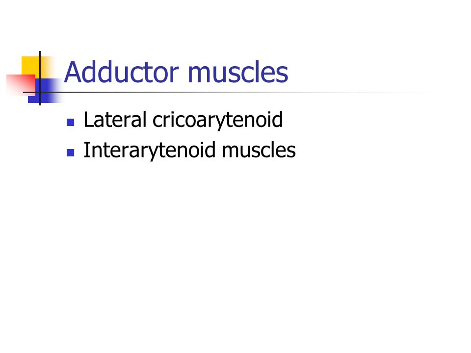 Adductor muscles Lateral cricoarytenoid Interarytenoid muscles