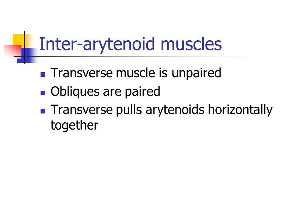 Inter-arytenoid muscles