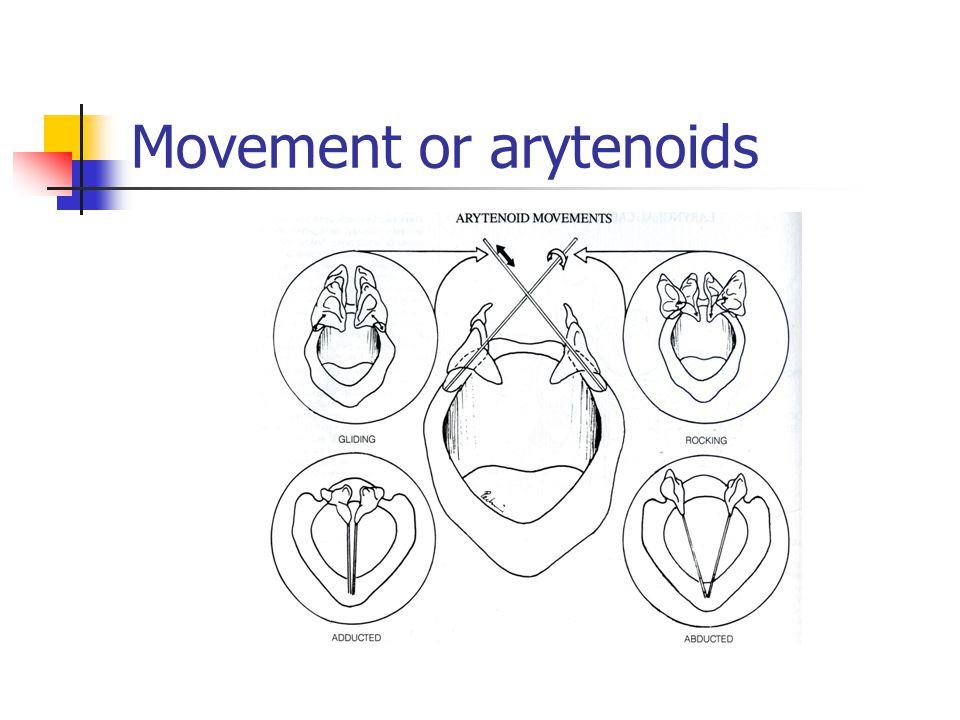 Movement or arytenoids