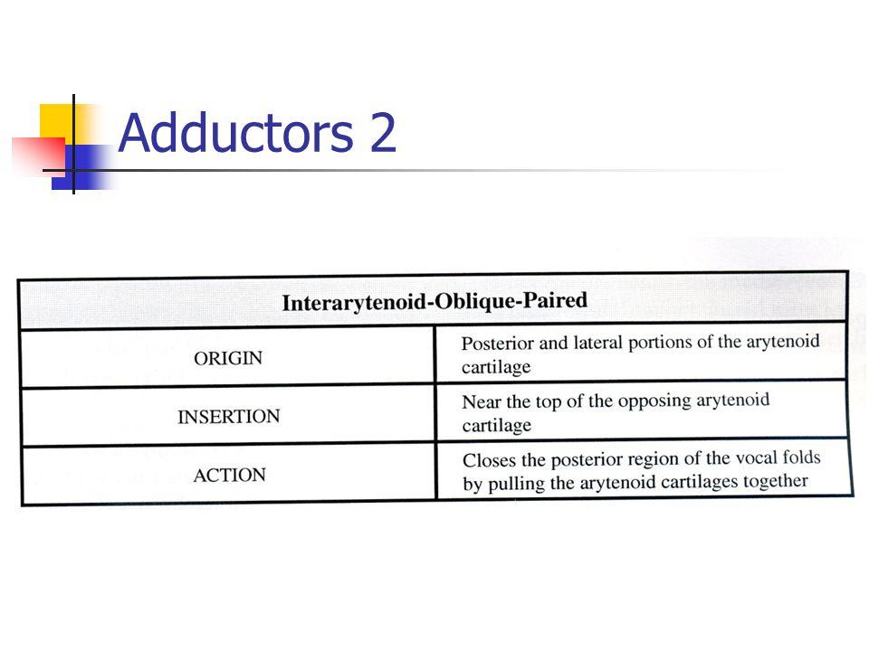 Adductors 2