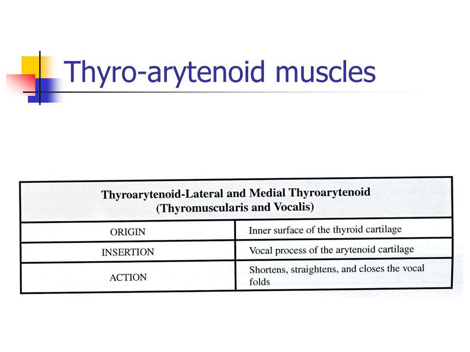 Thyro-arytenoid muscles