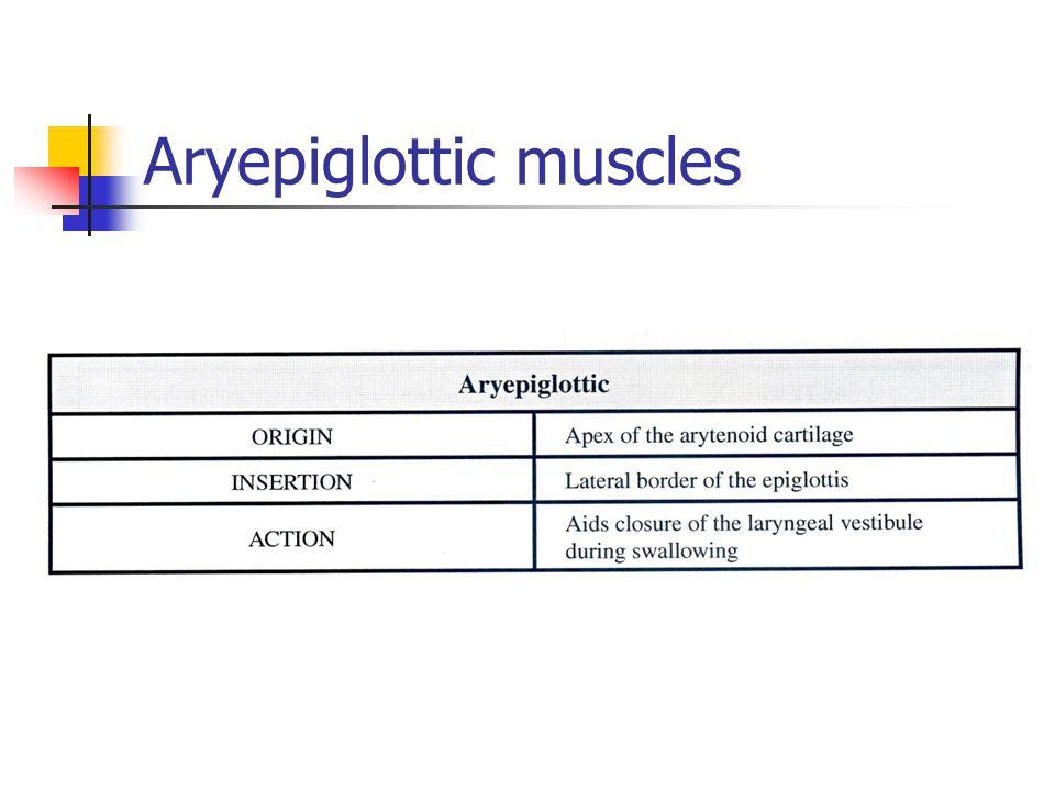 Aryepiglottic muscles