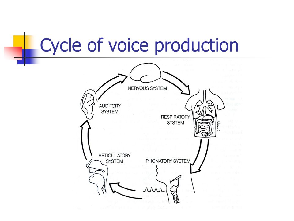 Cycle of voice production