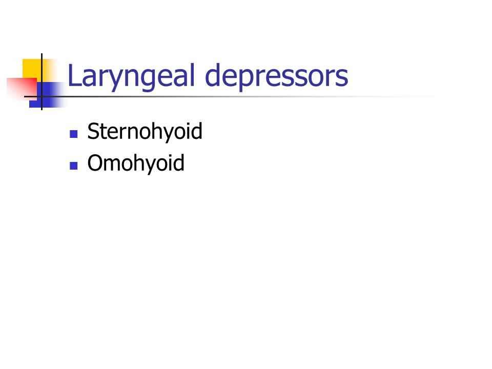 Laryngeal depressors Sternohyoid Omohyoid