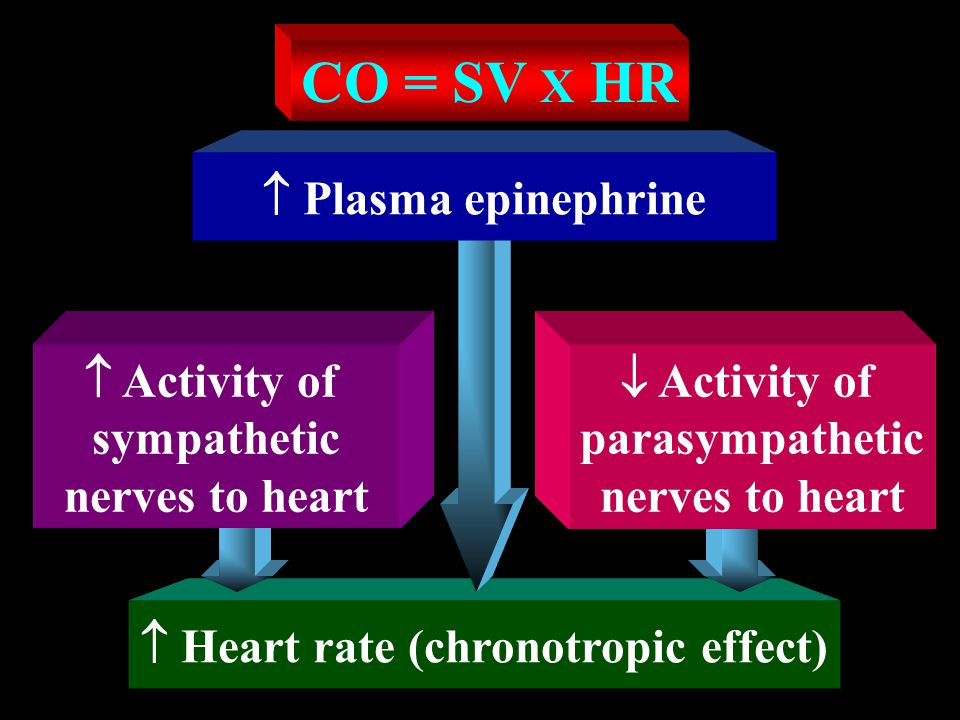  Heart rate (chronotropic effect)