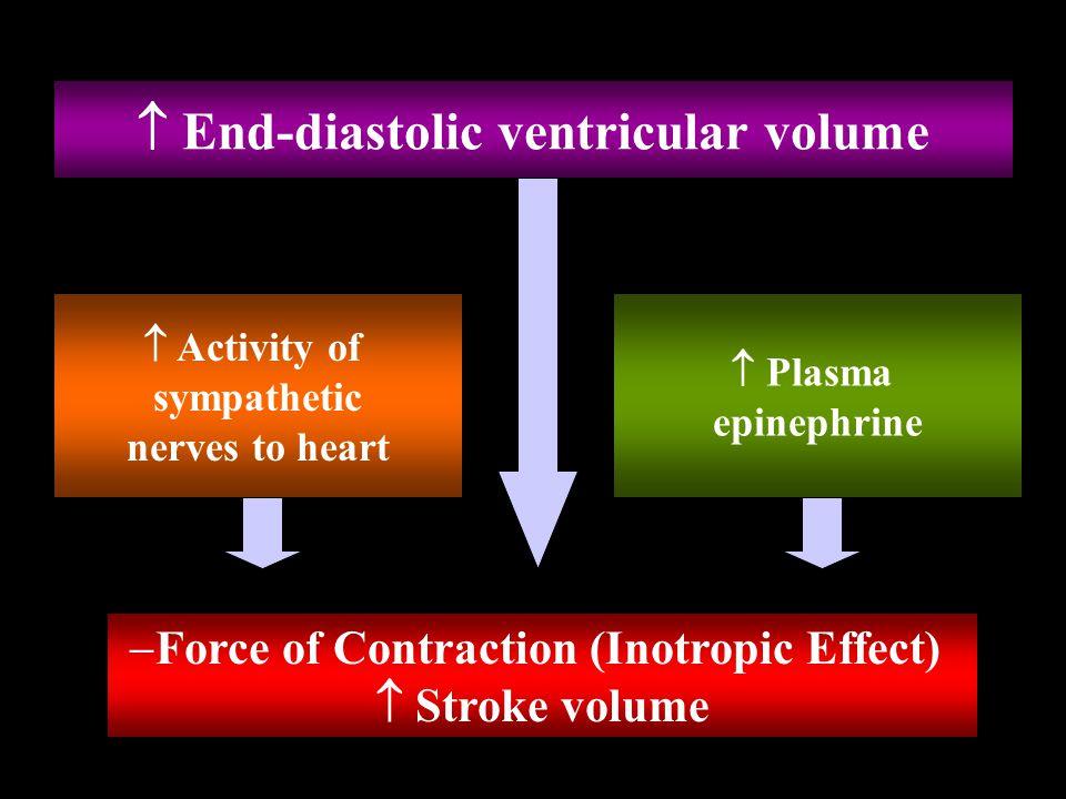  End-diastolic ventricular volume