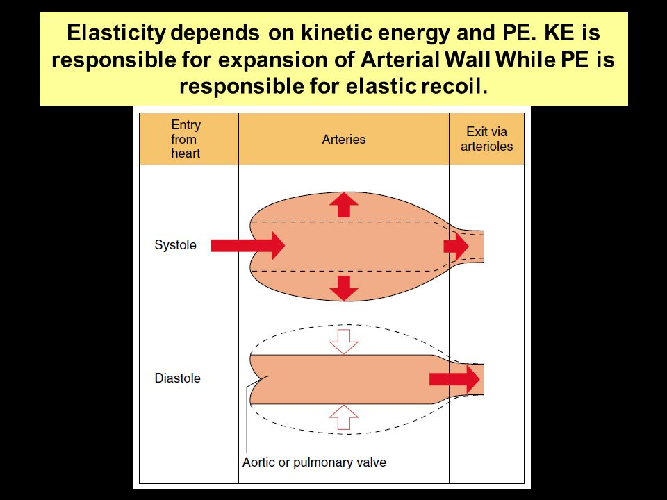 Elasticity depends on kinetic energy and PE