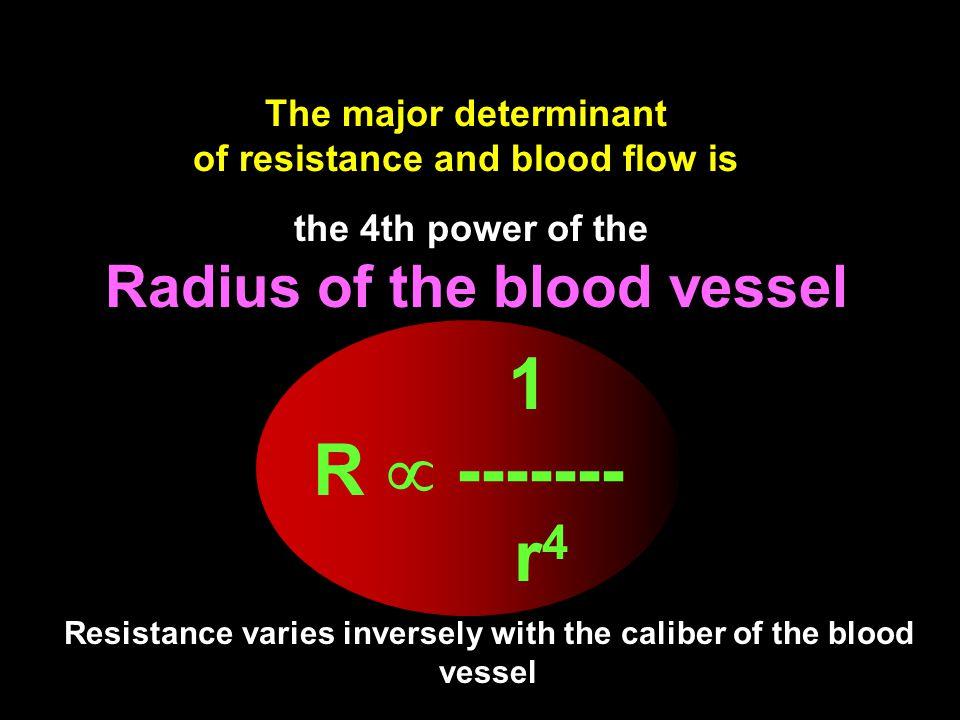 Radius of the blood vessel
