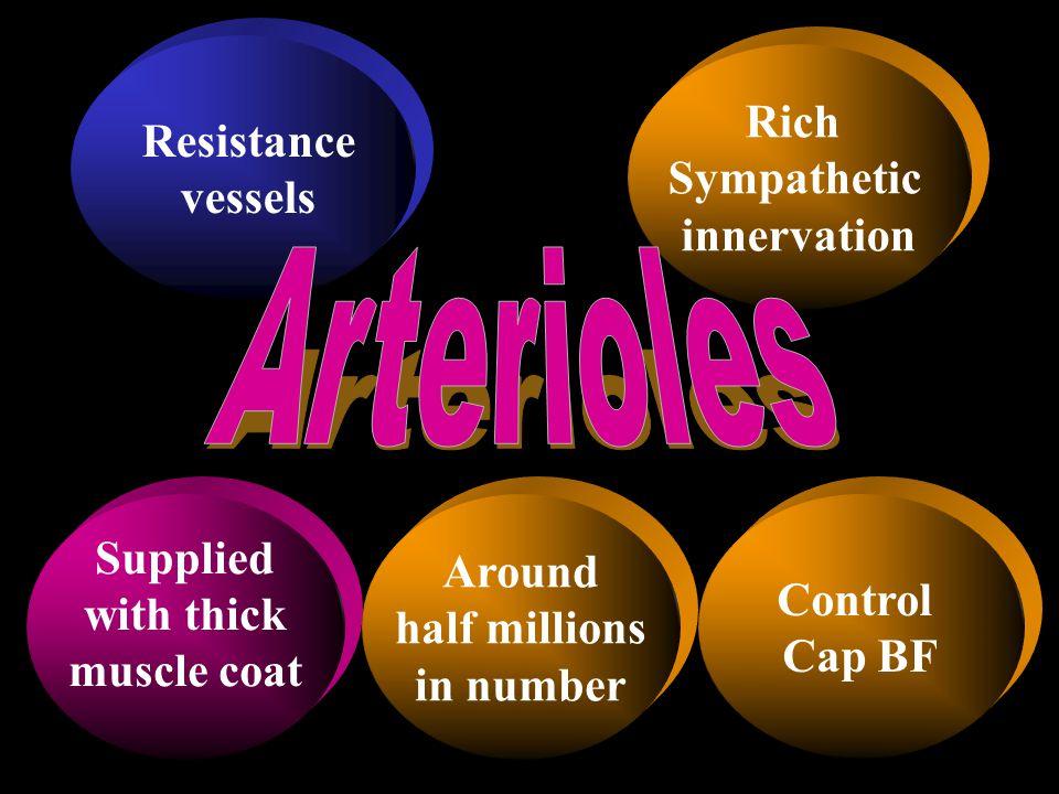 Arterioles Rich Resistance Sympathetic vessels innervation Supplied