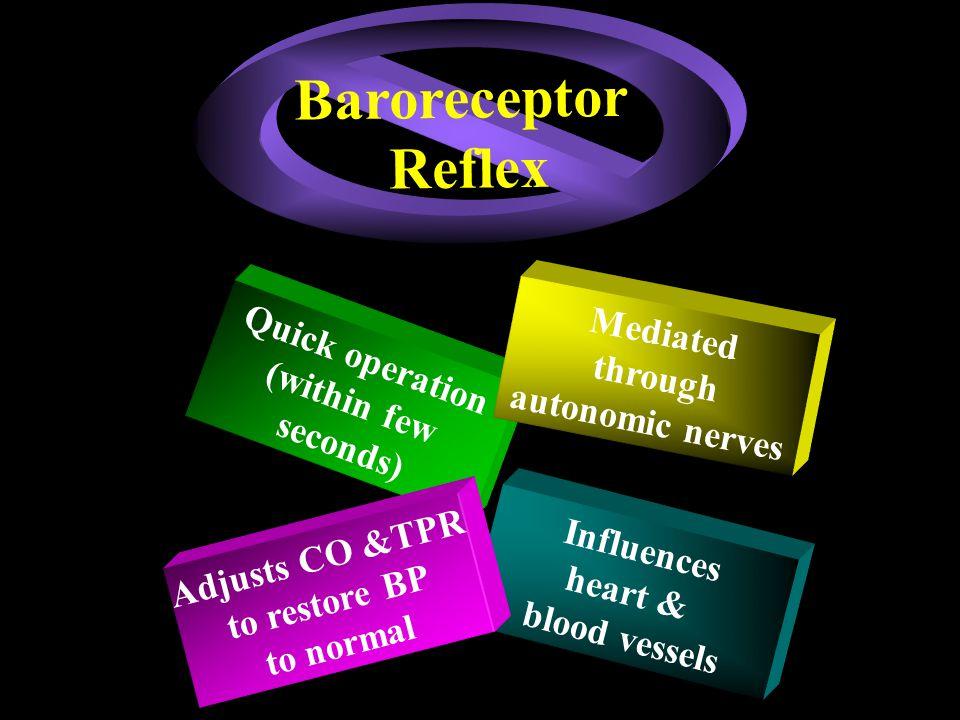 Baroreceptor Reflex Mediated Quick operation through (within few