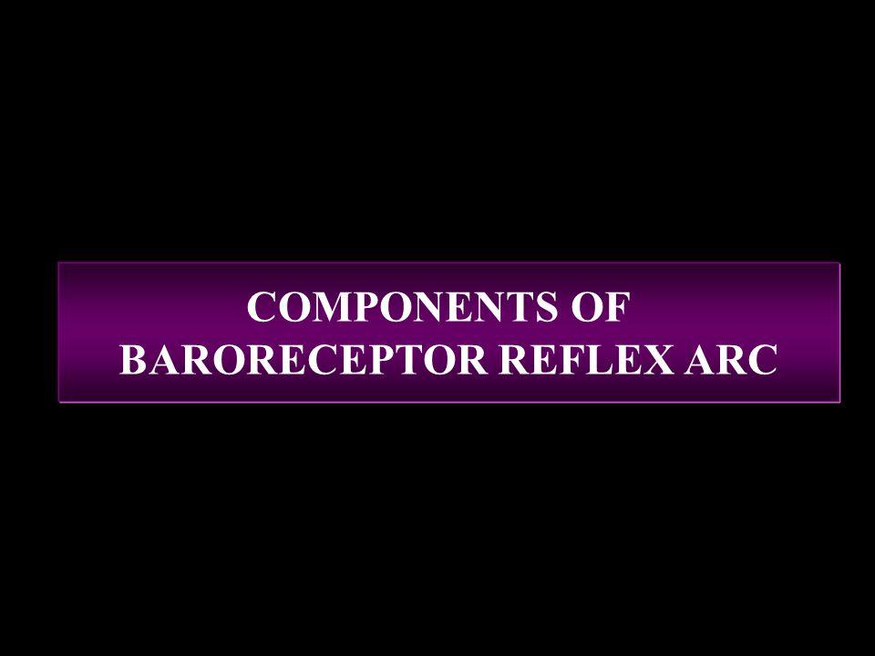 BARORECEPTOR REFLEX ARC