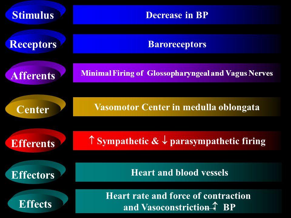 Stimulus Receptors Afferents Center Efferents Effectors Effects