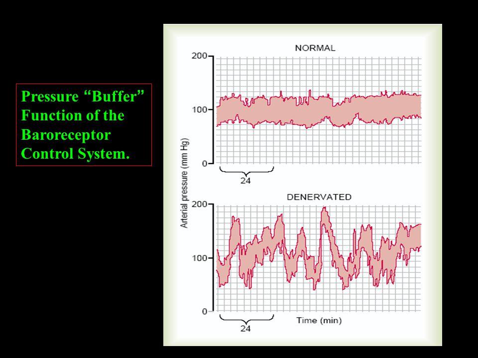Pressure Buffer Function of the Baroreceptor