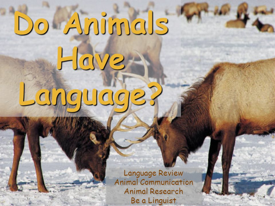Do Animals Have Language